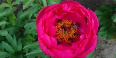 Неправильные пчёлы. И что с ними делать?