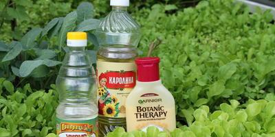Тестируем натуральные средства от комаров: пятерка лучших