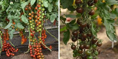 Самое время выбирать семена для нового сезона. Рекомендации от агрофирмы ПОИСК