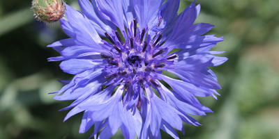 Мой синий сад