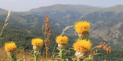 Восхождение в горы Армении (продолжение)