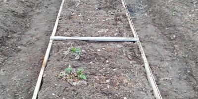 Капельный полив садовой земляники