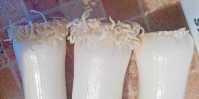 Мои пальмы из лука-порея ))))