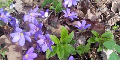 Весна пришла и в наши края!
