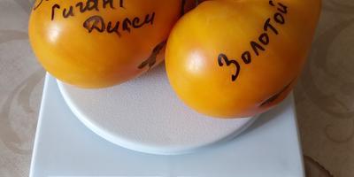 Перце- и томатомания!