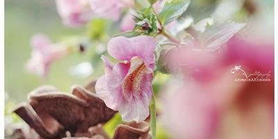 Мои фотографии моих цветочков.  Делюсь своими достижениями...))))