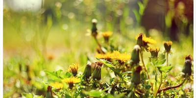 ...Вот так мы и жили без дела на мокрой, весенней земле...