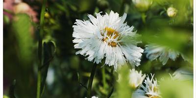Душа желает и должна два раза вытерпеть усладу: страдать от сада и дождя и сострадать дождю и саду......