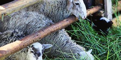 А будни здесь — Суровые: как живут российские фермеры