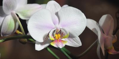 Из зимы в лето: VI Зимний фестиваль орхидей