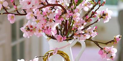 Перед расцветом: деревья и кустарники для выгонки