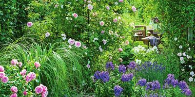 Парфюмерный набор, или Как создать в саду аромацветник