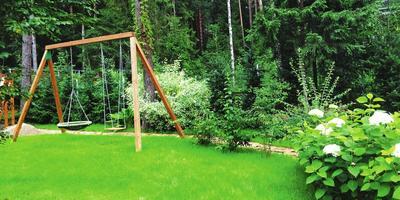 Зеленее не бывает, или 5 вопросов о газоне