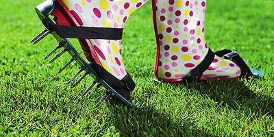 Лужайка день за днем: календарь газонных работ