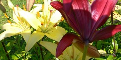 Верите ли вы в связь между человеком и растениями?