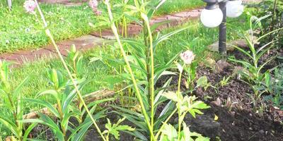 Помогите узнать, что за растение я посадила?