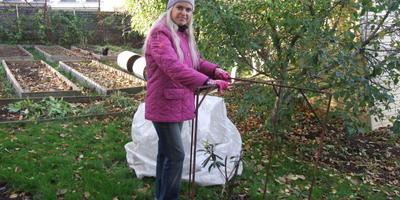 Ошибки при подготовке сада к зиме. Укрытие растений