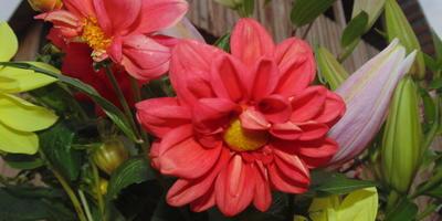 Размышление о цветнике, цветах и сухом ручье