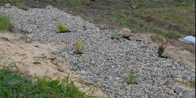 Лапчатка кустарниковая 'Голдфингер' -  украшение осеннего сада