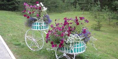 Цветочные композиции в белорусском санатории