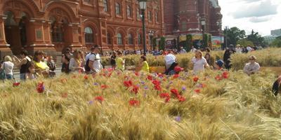 Фестиваль цветов в Москве в июле 2017 года