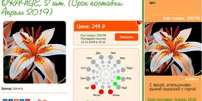 Лилия Оранж Электрик (Orange Electric)