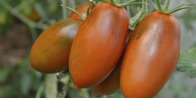 Самые вкусные томаты в декабре...