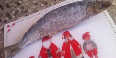 Помогите, пожалуйста, опознать эту рыбу!