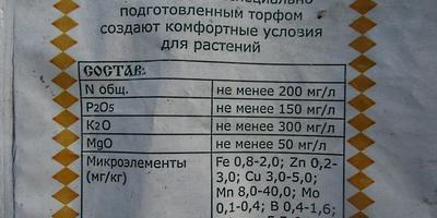 Петуния Ольга F1. III этап. Пикировка