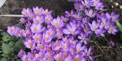 Закрутила весна хоровод