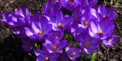 Зацвели первые тюльпаны и первоцветы. Заходите посмотреть!