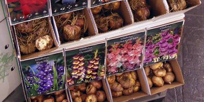 Где и у кого лучше покупать посадочный материал. Часть 2: интернет-магазины и цветочные рынки