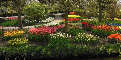 Голландские дворики. Часть 2. Идеи и фото для продвинутых любителей