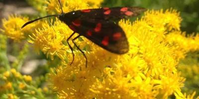 Мир насекомых...