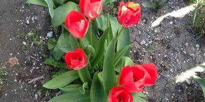 Такой мой апрель
