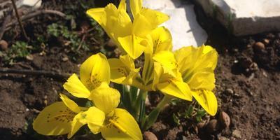 Весенние цветы и камни...