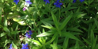 Помогите определить название дикорастущих цветов