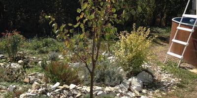 Деревья в моём саду. За два года от пустыни - к оазису