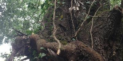 Душевное равновесие можно позаимствовать у Природы или вырастить его самому