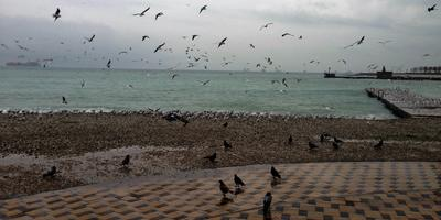 У моря под зимним дождём...