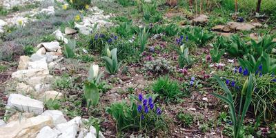 А у нас весна ... продолжается...