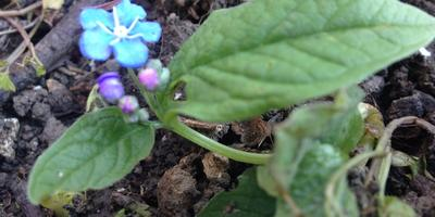 Мой сине-фиолетовый апрель