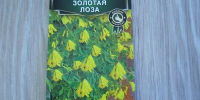 Поделитесь опытом выращивания дицентры из семян