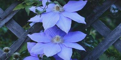 Подскажите название этого цветка