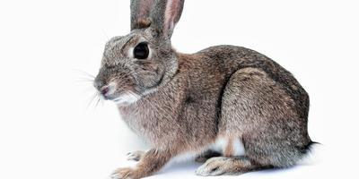 Мягкие и пушистые: что нужно знать новичку о разведении кроликов