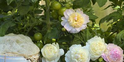 Что такое Аэрированный компостный чай (АКЧ)