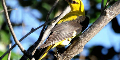 Насекомоядные птицы в моем саду
