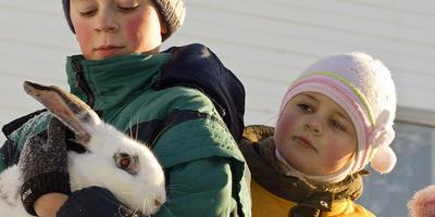 Кролики в приусадебном хозяйстве