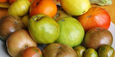 Замораживание томатов