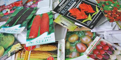 Ревизия семян